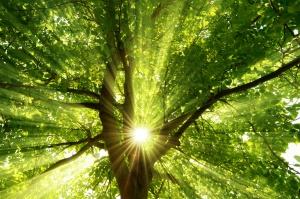 Sonne strahlt explosiv durch den Baum