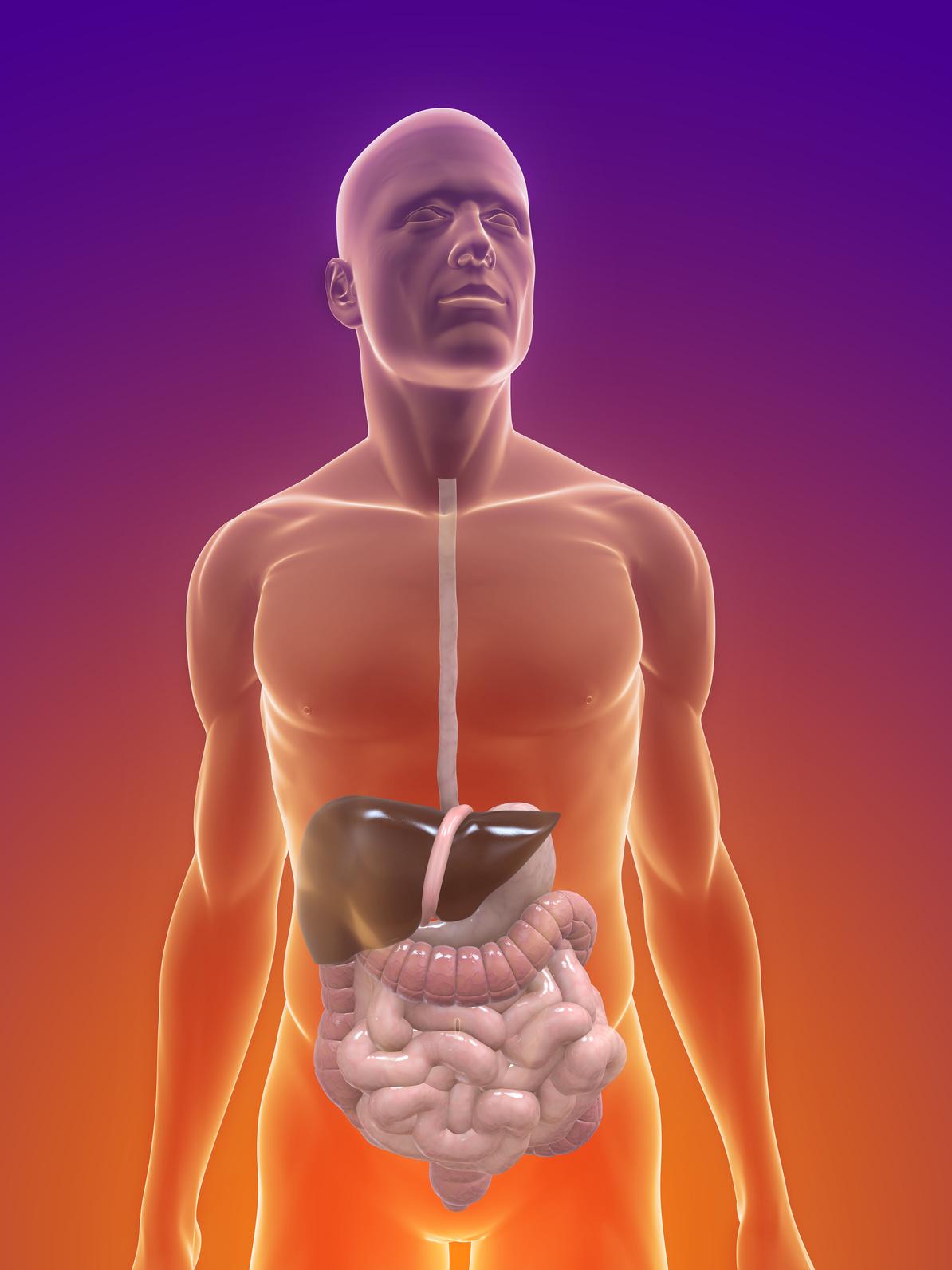 Länge: 800 cm / Fläche: 500 qm – unser Darm, ein Mirakel | Lebenskraft