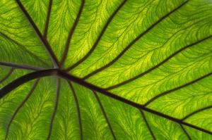 Close-up groen blad met nerven